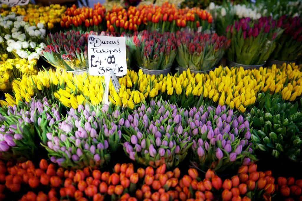 ColumbiaRoad_tulips