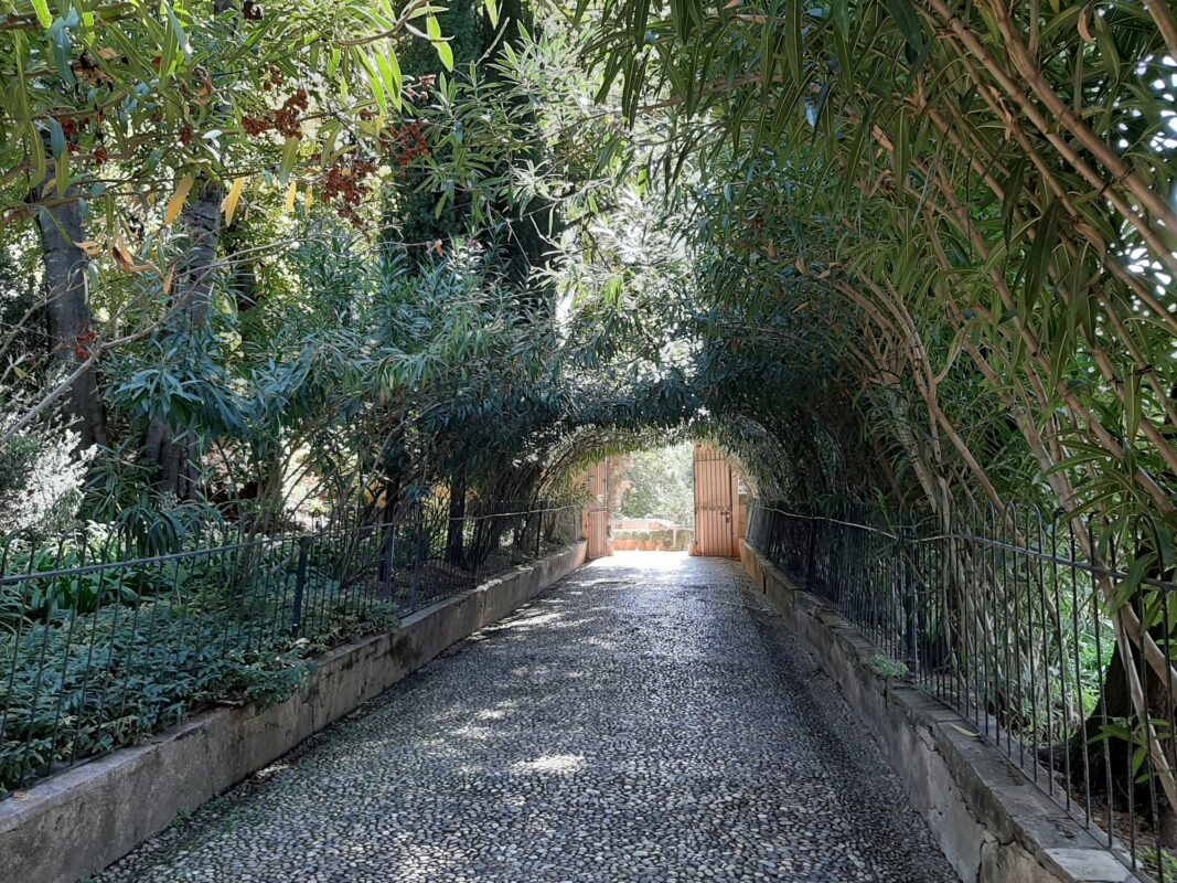 A shady walkway in the Alhambra gardens.